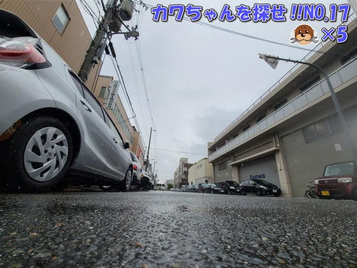 カワちゃんを探せ!!【雨の日ver.】